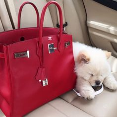 Don't have to have Hermes but the bag and color are hott!! The puppy is the cherry on top.