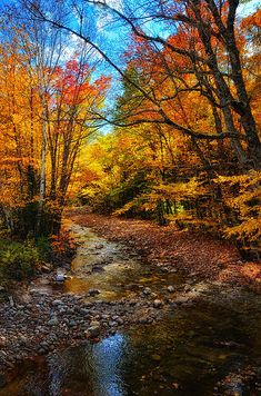 White Mountains, along the Kancamagus Highway, New Hampshire ~ Nh Foliage IIi by Tricia Marchlik *