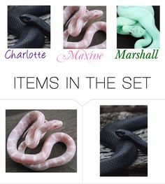 """""""Charlotte,Maxine and Marshall (Pet snake)"""" by maxinehearts ❤ liked on Polyvore featuring art"""