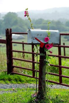 Hollyhocks, mailboxes, and fences...What a perfect combination for the ranch entrance..