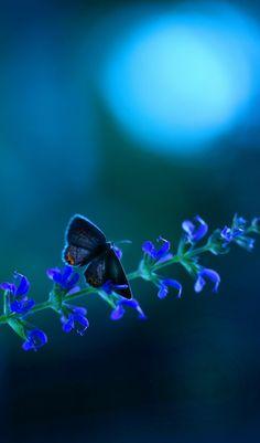 Moonlit Butterfly