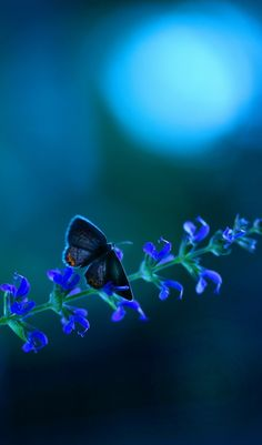 Moonlit Butterfly