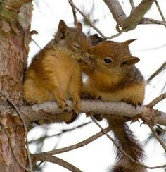 Squirrels, look at how it is holding the other ones head @Marguerite Splawiec