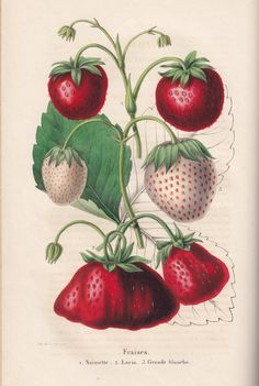Vintage Printable Strawberry