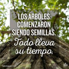 The Nicest Pictures: los arboles Sentences, Quotations, Best Quotes, Cool Pictures, Poster Prints, Positivity, Thoughts, Motivation, Sayings