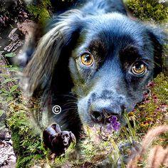 Dog Gone Good! by Rita Scott on Etsy