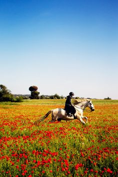 Food Styling and Photography Workshop in France | La Tartine Gourmande | The girl on a horse in the poppyfield