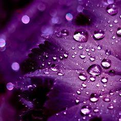 pretty purple flowers - Google Search