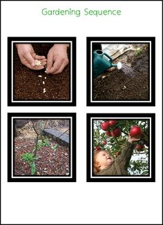 Gardening Sequencing Cards: Have each child place the cards in sequential order.