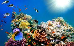 50 Best Aquarium Backgrounds Print