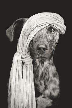 Pirate of the Baltic Sea by Elke Vogelsang, via 500px