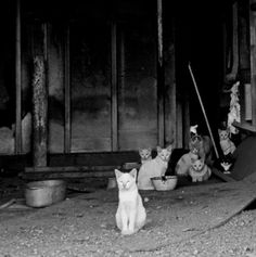 cats hanging out in Lordsburg, New Mexico, an abandoned town. by Meredith Rainey on etsy