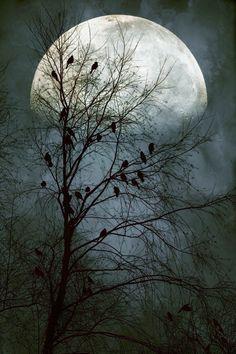 """Black Birds Singing in the dead of night""   Photo by John Rivera"