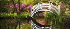 Welcome spring with a relaxing tour of Magnolia Plantation and Gardens in Charleston, South Carolina - VisitSouth.com