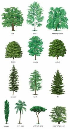 Gardens Discover Watercolor Clipart Spruce Pine Conifer trees Forest by ReachDreams Landscape Drawings Landscape Design Garden Design Landscape Architecture Drawing Landscapes Garden Trees Trees To Plant Conifer Trees Evergreen Trees Landscape Drawings, Landscape Design, Garden Design, Landscape Architecture, Tree Leaf Identification, Conifer Trees, Evergreen Trees, Conifer Forest, Evergreen Landscape