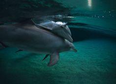 Dolphin Dreams by Dolphin Discover at Dreams Puerto Aventuras
