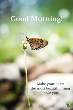 Good morning quote on picture with beautiful butterfly. Good Morning Coffee, Happy Morning, Good Morning Good Night, Good Morning Wishes, Good Morning Inspirational Quotes, Good Morning Quotes, Night Quotes, Morning Pictures, Morning Images