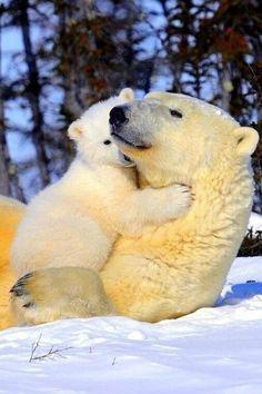 ours polaire, inspiration de la nature sauvage