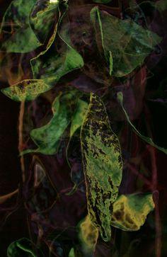 Untitled [floral] - Tassia B.