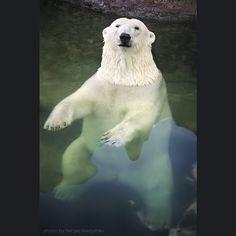 spa for a polar bear by sergei gladyshev on 500px
