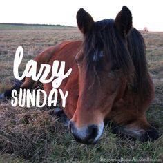 Image result for sunday funny quote  horse