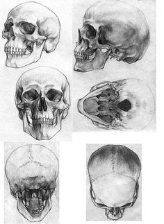 Anatomy Art, Anatomy Study, Human Skull Anatomy, Human Anatomy Drawing, Anatomy Bones, Anatomy Images, Skull Illustration, Skull Sketch, Skull Reference