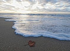 Lì dove la battigia battezza le foglie secche scoprirai il giorno della notte e ti scoprirai mare.. Buon Anno in #poesia <3