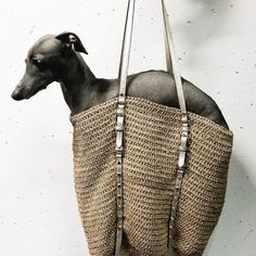 Vamos a la playa in Michael Kors raffia beach bag // #ItalianGreyhound // Italian Greyhound