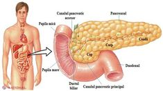 Pancreasul este un organ foarte important al organismului uman, responsabil într-o măsură ma... Diet Menu, Health Fitness, Education, Vegetables, Food, Sport, Home, Anatomy, Diet Plan Menu