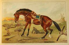 Reichardt, J. M. Peter's Schicksale oder Lebenslauf eines Pferdes. Verlag von J. M. Reichardt, Halle Ca. 1900
