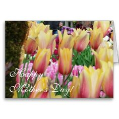 Tulips - Pink and Yellow - Happy Mother's Day Greeting Card