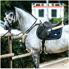 Basic Rules About Horseback Riding For Beginners Basic Rules About Horseback Riding For Beginners - Art Of Equitation Cute Horses, Pretty Horses, Horse Love, Horse Girl, Beautiful Horses, Equestrian Outfits, Equestrian Style, Equestrian Fashion, Dapple Grey Horses