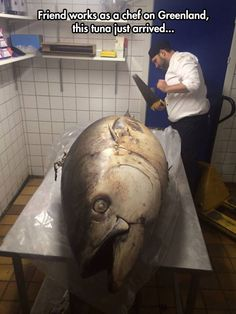 That's One Huge Fish