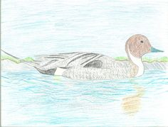 The 2013 Florida Junior Duck Stamp of Stephanie Ali, 13, honorable mention in Group 3, grades 7-9. DDWS photo