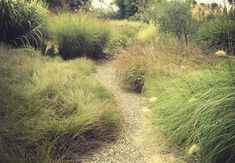 grasses in the garden - Google Search