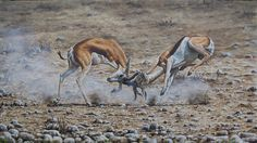 """Dance of Death "" Springboks fighting. Oils on board x Dance Of Death, Wildlife Art, Paintings, Board, Animals, Animales, Paint, Animaux, Painting Art"