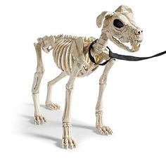 21 12 skeleton dog on leash halloween decorations and decor