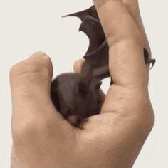 This a reason why I love bats!❤️