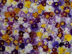 Glorious Pansies, by bbritters via Photo Bucket