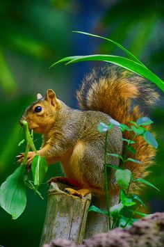 Squirrel:  (Photo By: Patrick Strock on 500px.)