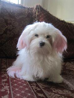 sleepy sophie with pastel pink ears & tail <3