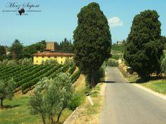 Toscana/Toskana: Entdecken Sie bei uns die großartigen Weine aus den Anbaugebieten Montalcino, Montepulciano, Chianti, Maremma und Orcia, dieser historischen und bedeutenden Kulturlandschaft.  http://www.merz-sapori.de/region.php?id=10&strname=Toskana   #weinausitalien #italien #toscana
