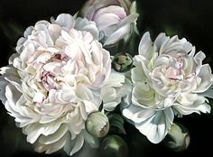 marcella kaspar - oil on linen peonies