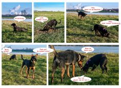 Buddelstory | http://www.dog-smilla.de/fotos-maerz-2014/