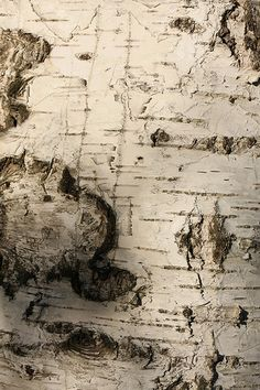 Birch tree bark. When I first saw it I thought it was an ancient map. (Me too! kn)