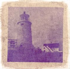 Anthotypes – Making a Print Using Plants · Lomography