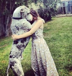 Blue Merle Great Dane. This is my dream dog!