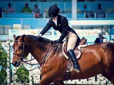 appreciation | Devon Horse Show