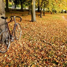 A Raleigh Classic and a carpet of leaves