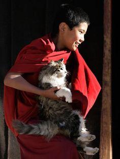 Novice Monk and Cat
